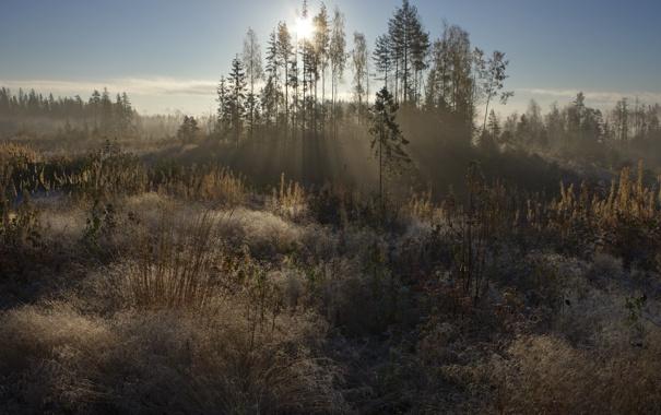 Фото обои свет, природа, утро