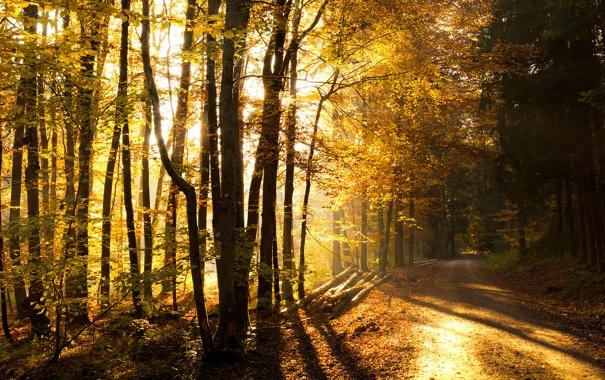 Фото обои дорога, осень, лес, forest