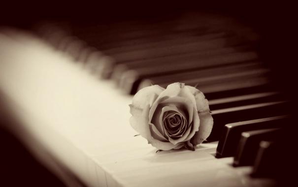 Фото обои фон, роза, пианино