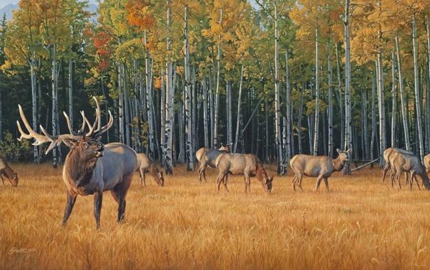 Фото обои осень, желтая трава, живопись, олени, стадо, осенний лес, Daniel Smith