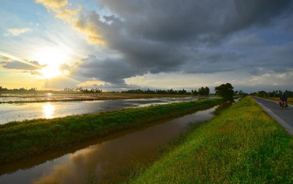 Фото обои дорога, солнце, закат, поля, рисовые