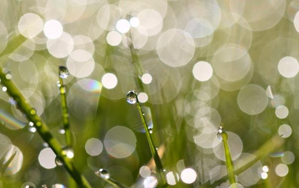 Фото обои трава, макро, блики