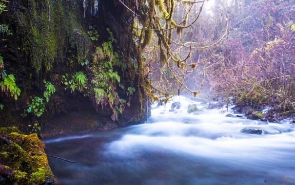 Фото обои лес, деревья, природа, река, поток