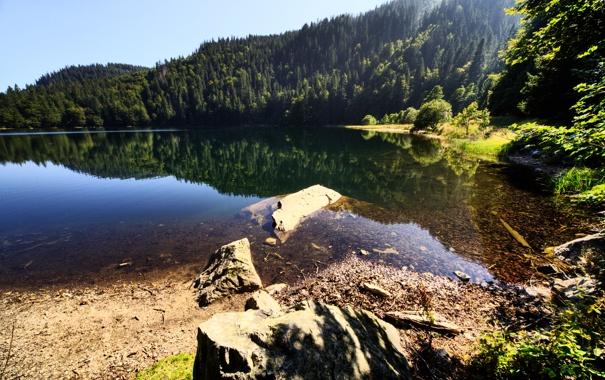 Фото обои лес, вода, природа, озеро, гладь