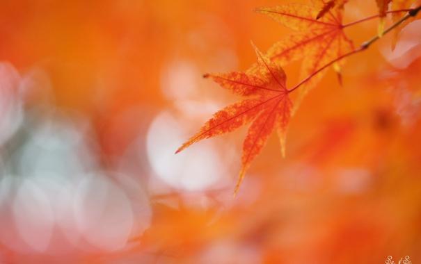 Фото обои листья, блики, фон, красные