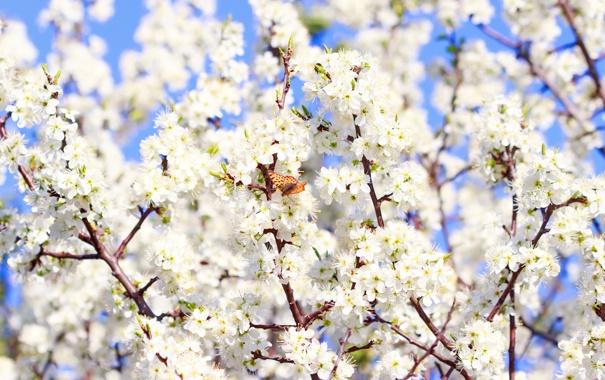 Фото обои весна, sunshine, цветение, бабочка, spring, flowers, blossom
