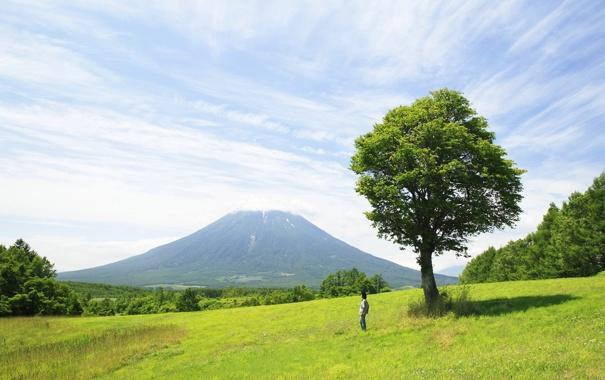 Фото обои лес, трава, деревья, пейзаж, природа, дерево, один