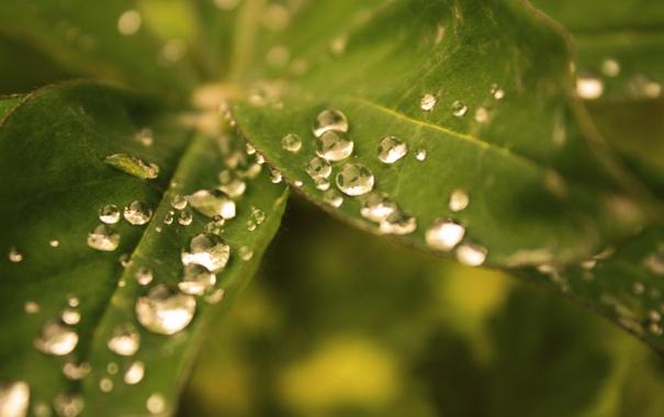 Фото обои зелень, капли, макро, лист, тепло, обои, размытость