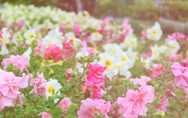 Фото обои цветы, парк, сад