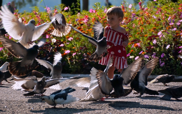 Фото обои голуби, птицы, девочка