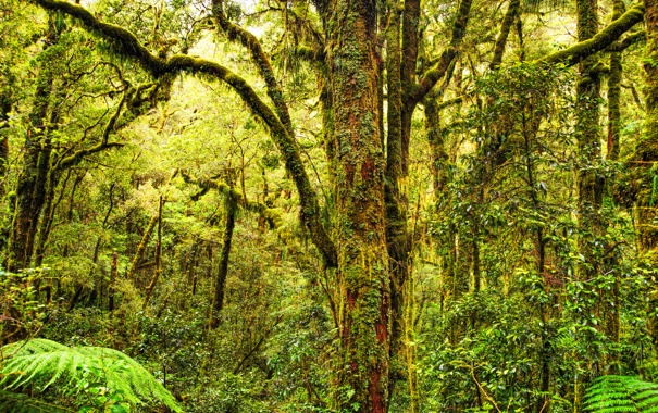 Фото обои green, forest, trees