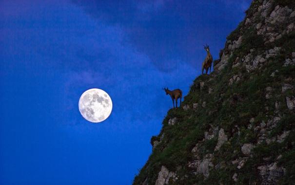 Фото обои животные, ночь, камни, луна, гора