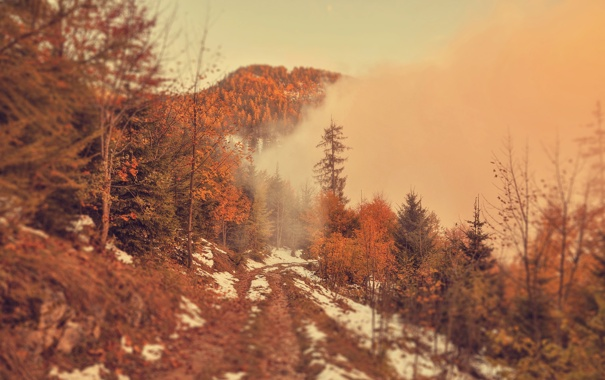 Фото обои forest, trees, landscape, nature, autumn, view, scenery