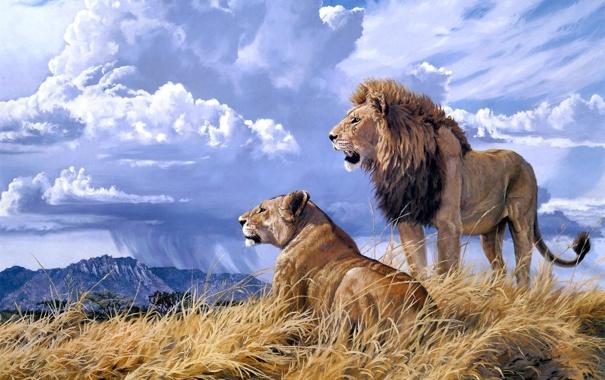 Фото обои животные, облака, гора, лев, живопись, львица, Lindsay B. Scott