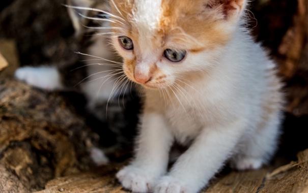 Фото обои глаза, взгляд, малыш, котёнок