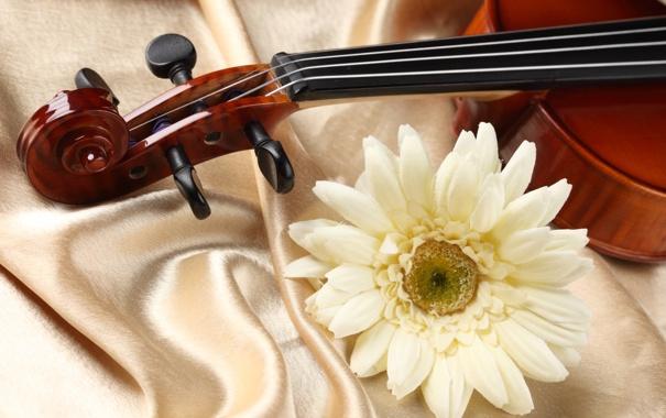 Фото обои цветок, скрипка, ткань, flower, атлас, violin, fabric