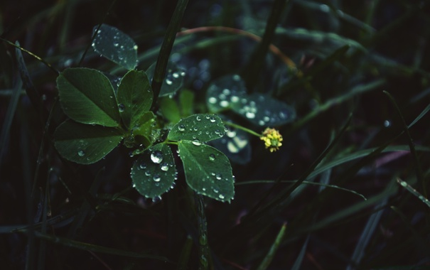 Фото обои листья, капли, in the rain