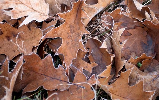 Фото обои листва, сухая, дубовая