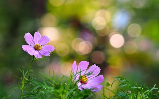 Фото обои трава, цветы, лепестки, розовые цветы, боке