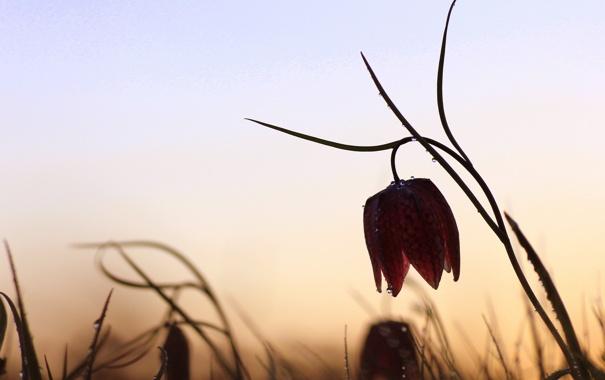 Фото обои цветок, капли, природа