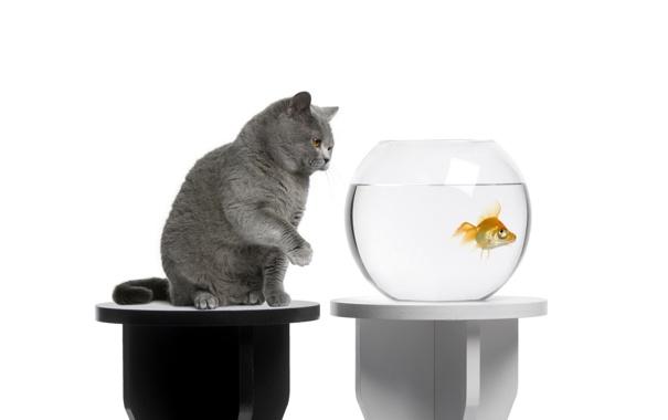 Фото обои кот, аквариум, рыбка