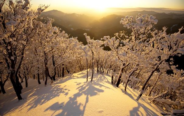 Фото обои зима, снег, деревья, горы, рассвет, япония, утро