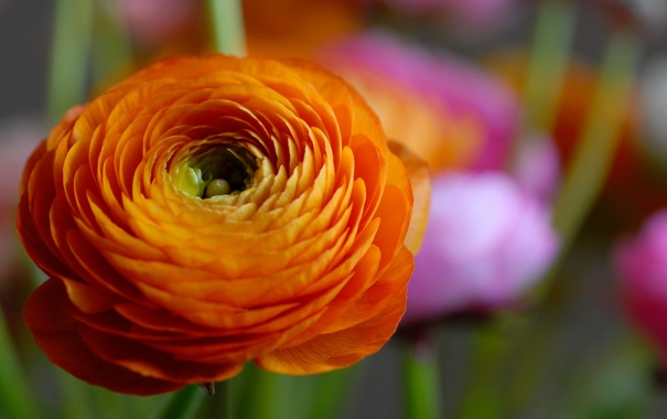 Фото обои цветок, оранжевый, лепестки, красочный