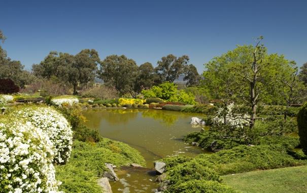 Фото обои деревья, пруд, камни, сад, Австралия, кусты, Cowra Japanese Garden