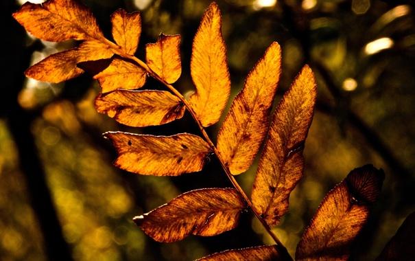 Фото обои осень, листья, макро, природа, жёлтый, дерево, листва
