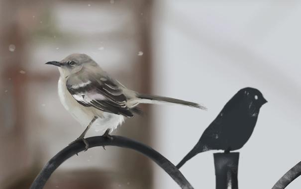 Фото обои снег, металл, птица, забор, ограда, арт