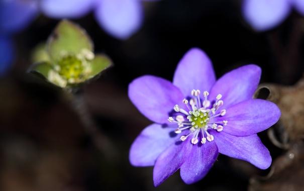 Фото обои цветок, лето, макро, природа, лепестки, размытость