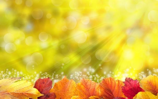 Фото обои листья, солнце, colorful, autumn, leaves, осенние