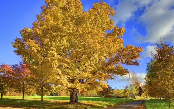 Фото обои дорога, осень, листья, дерево, Природа
