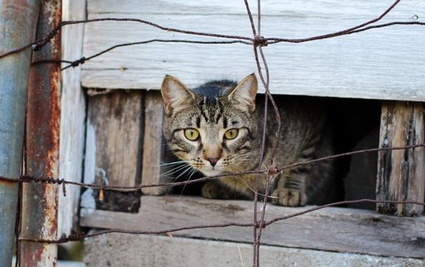 Фото обои кошка, взгляд, забор