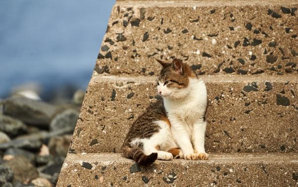 Фото обои кошка, кот, взгляд, кошак, сидит