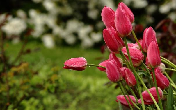 Фото обои капли, цветы, природа, дождь, стебли, весна, сад