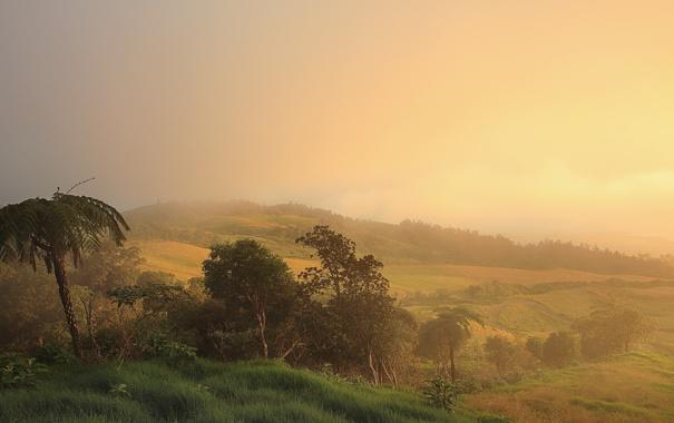 Фото обои поле, лес, природа, пальмы, утро