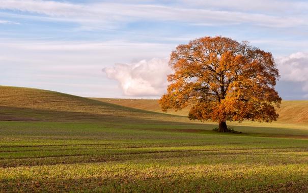 Фото обои поле, осень, пейзаж, дерево