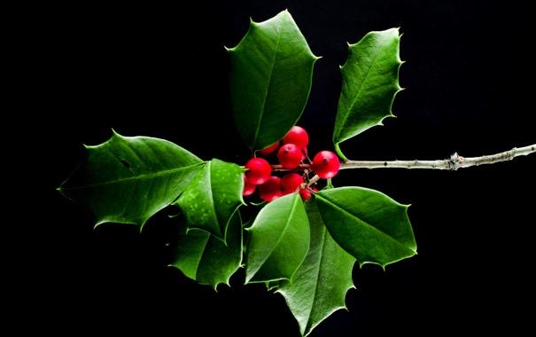 Фото обои листья, макро, ягоды, ветка, плоды