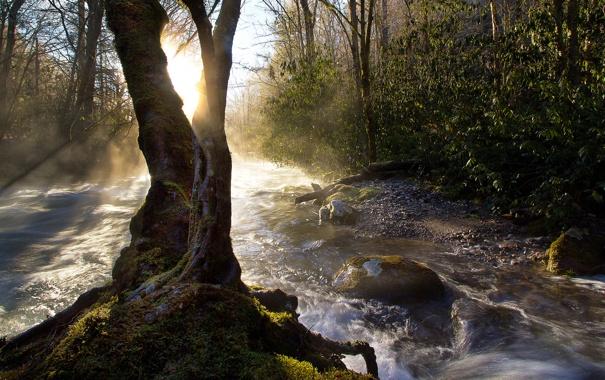Фото обои река, дерево, поток
