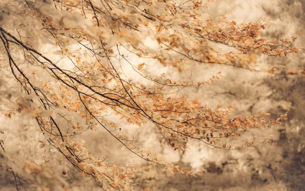 Фото обои осень, ветки, фон, листва, размытость