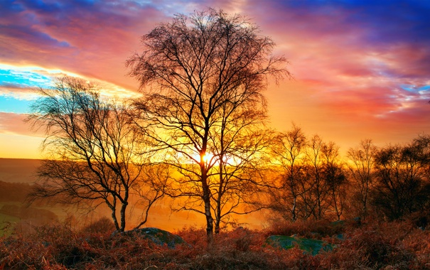 Фото обои осень, небо, солнце, свет, природа, тепло, дерево