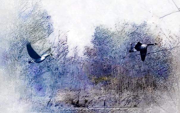 Фото обои птицы, природа, картина