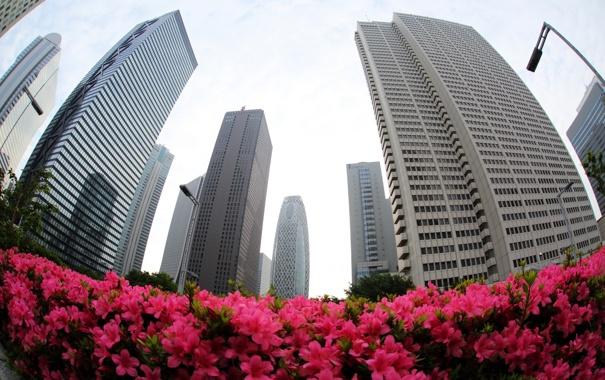 Фото обои цветы, город, здания
