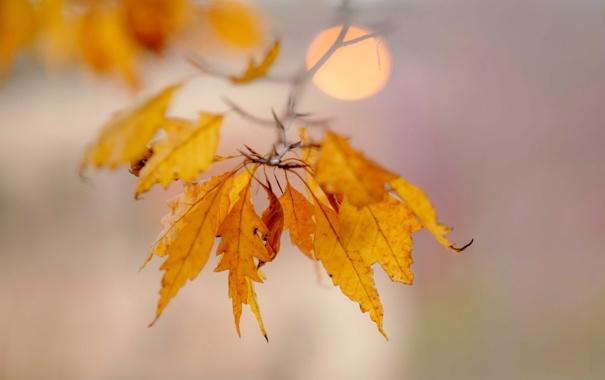 Фото обои листья, ветка, желтые, осенние