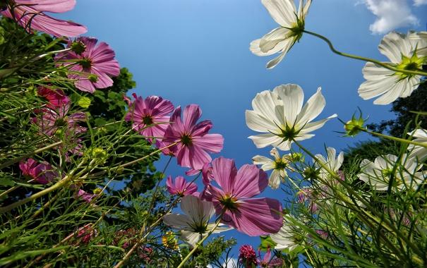 Фото обои лес, макро, цветы, природа, парк, фото, обои