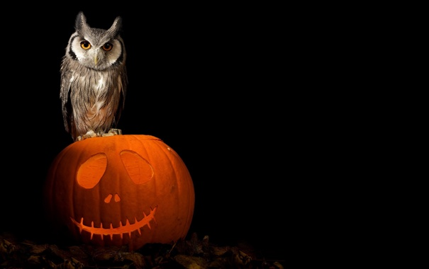 Фото обои art, pumpkin, owl, halloween