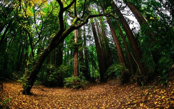 Фото обои зелень, осень, лес, природа, листва
