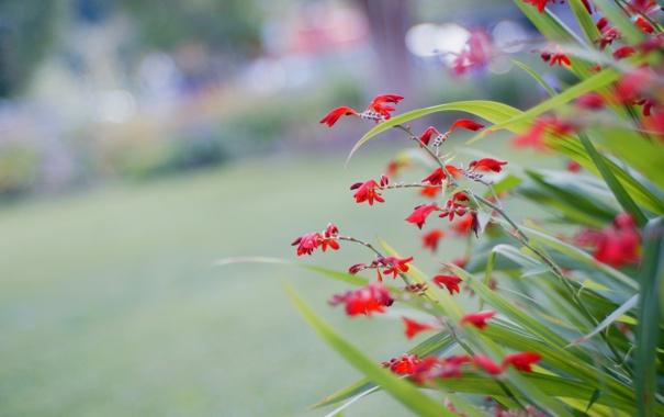 Фото обои листья, макро, цветы, растение, сад, двор