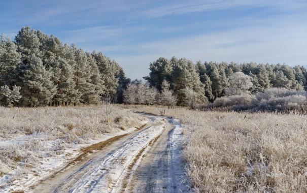 Фото обои иней, дорога, поле